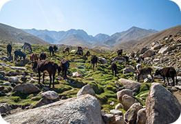 afghanistan-business-visa
