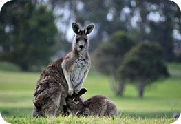 australia-ebusiness-visa
