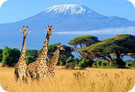 kenya-etourist-visa