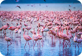 kenya-tourist-visa