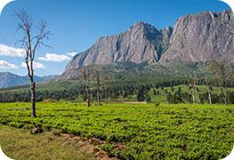 malawi-visa.images