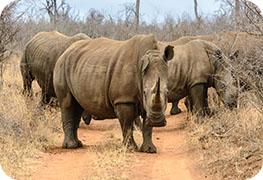 swaziland-visa-image