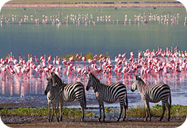 tanzania-etourist-visa